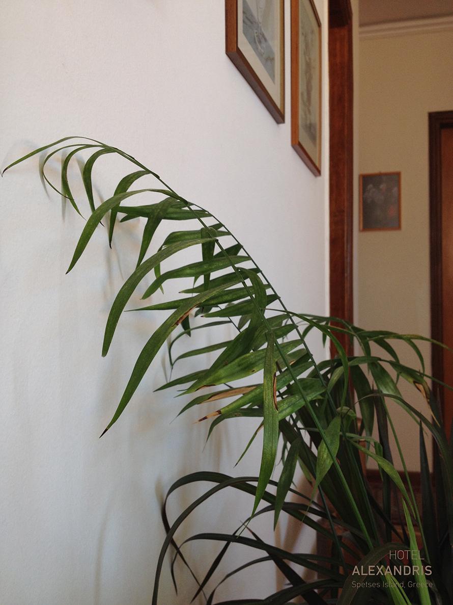 hotel_plant_compo_2a
