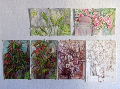 Begonias and more from L.C garden-watercolors